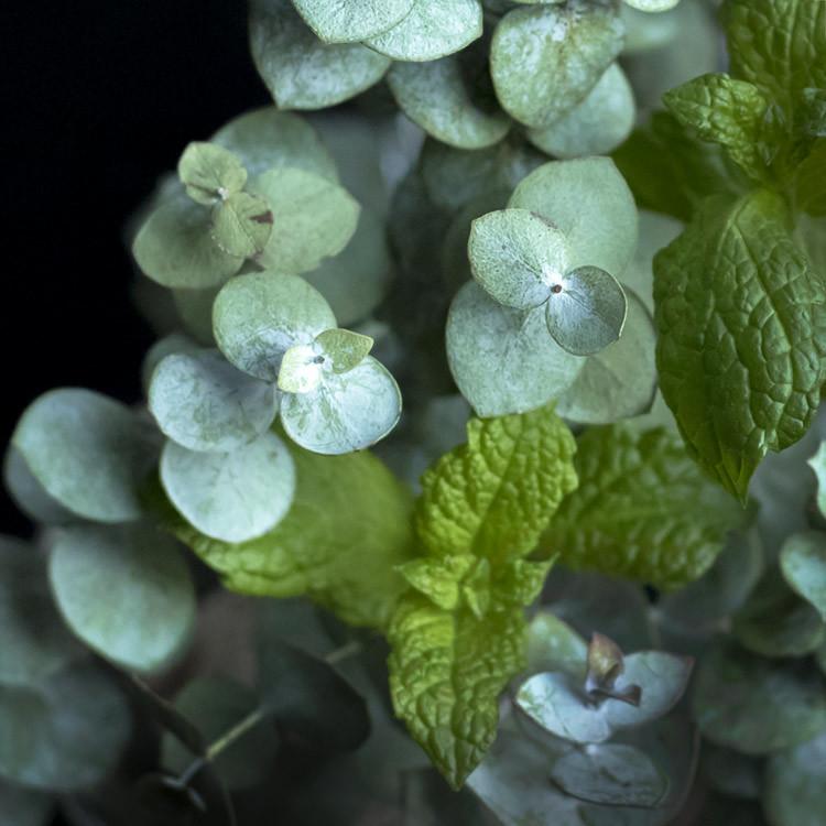 Pepperment eucalyptus fragrance oil