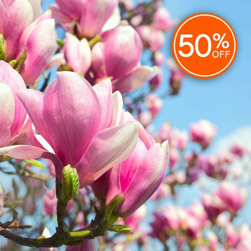 Pink Magnolia Blossom Fragrance Oil - CandleScience