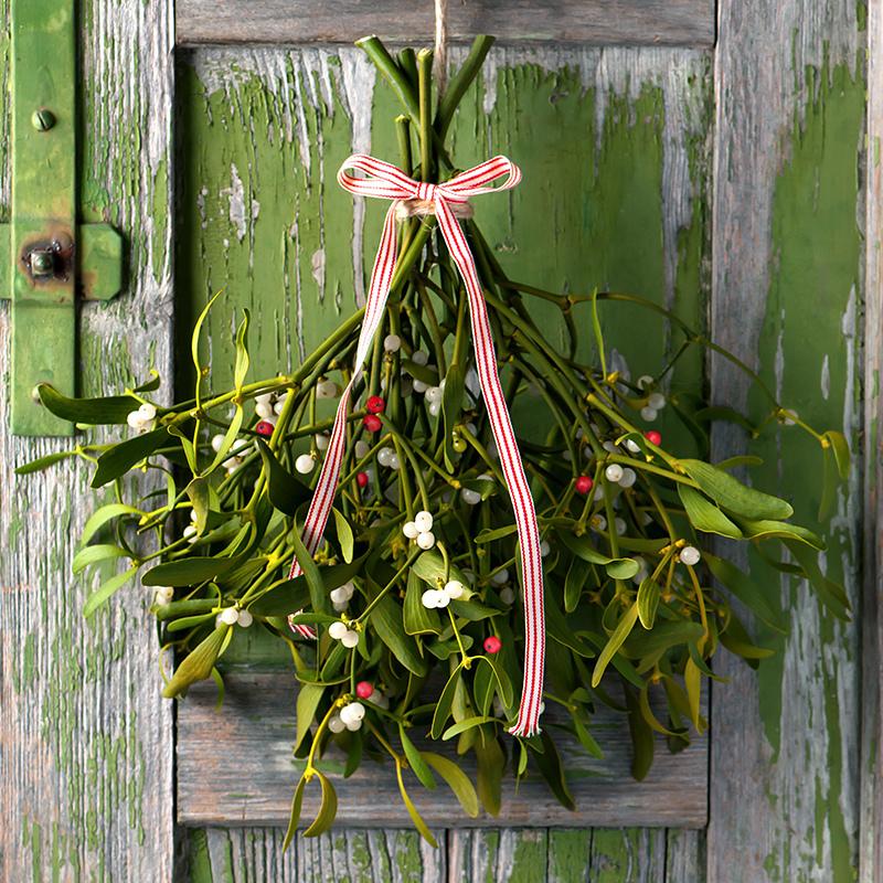 Mistletoe Fragrance Oil