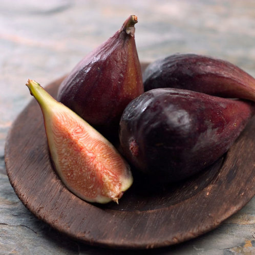 Fig Tree (Discontinued Version)