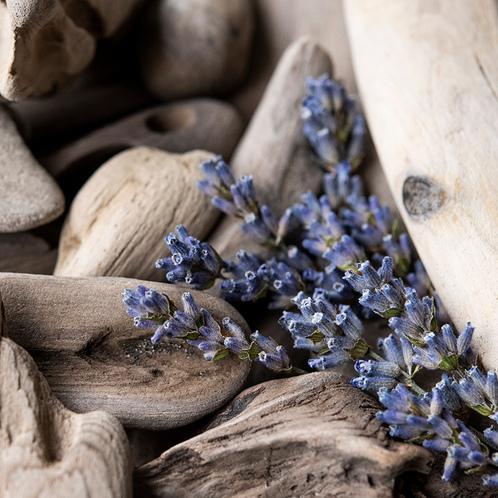 Lavender Driftwood