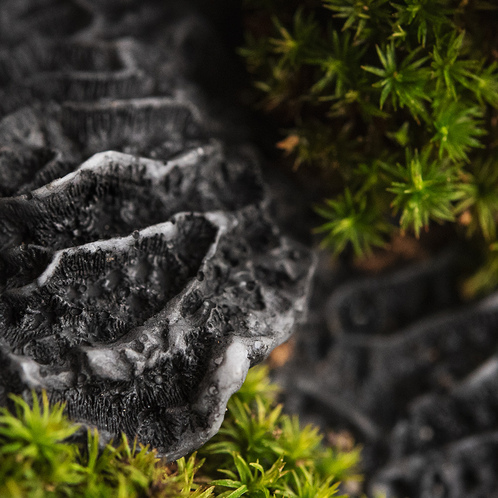 Black Coral and Moss
