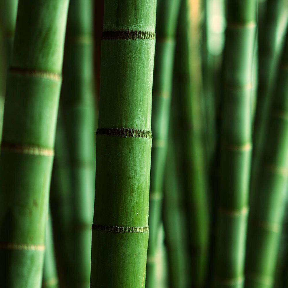 Himalayan Bamboo Fragrance Oil