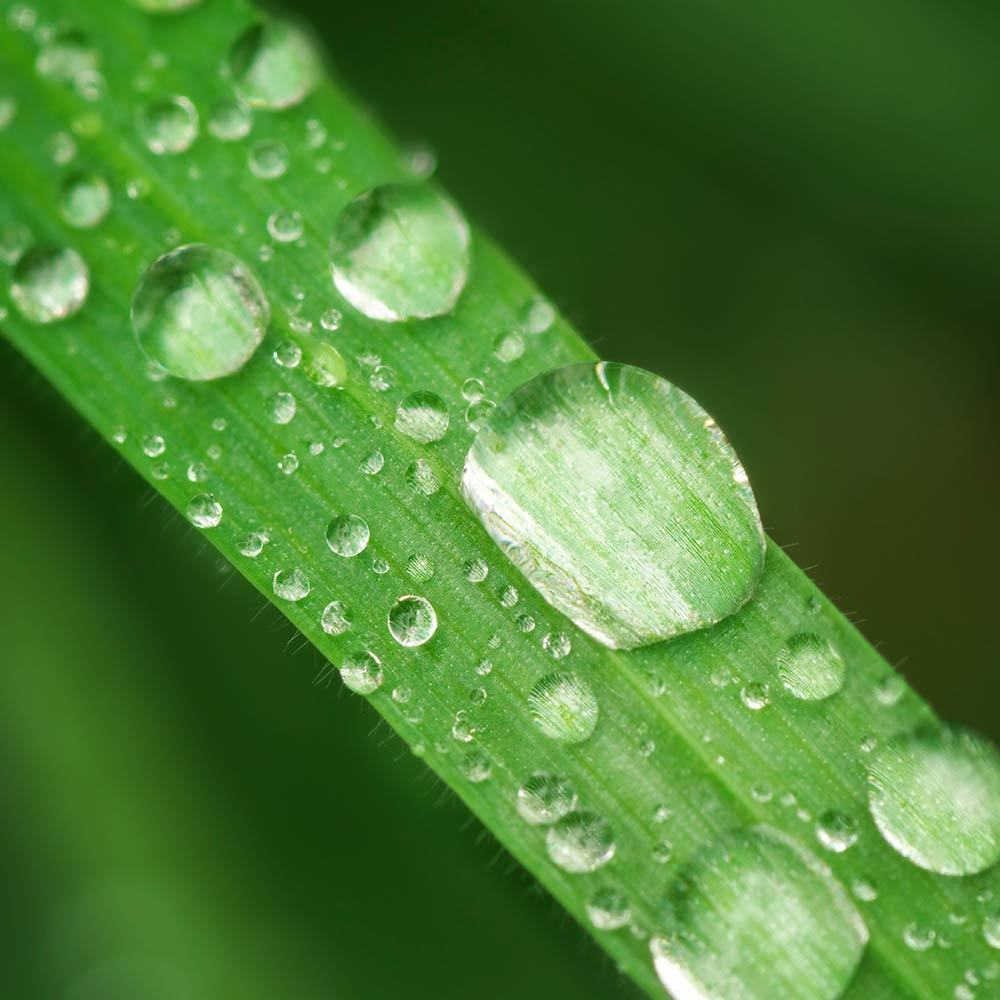 Rain water 1000px